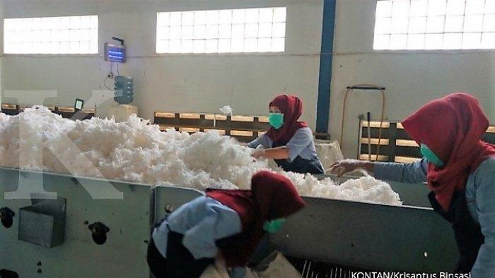 Cottonindo Tingkatkan Produksi Kapas 3 Kali Lipat Setelah Pabrik Barunya Beroperasi