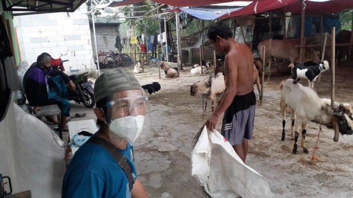 Omzet Menyusut Lebih dari 50 Persen, Sulis Putar Otak Jual Hewan Kurban di Tengah Pandemi