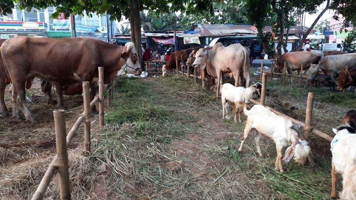 Pedagang Hewan Kurban di Tangsel Keluhkan Omzet Merosot Tajam