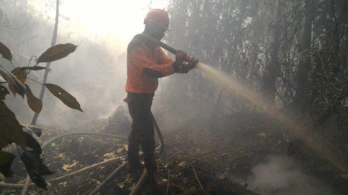 UPDATE Karhutla, Berkat Teknologi Modifikasi Cuaca (TMC), BNPB: Titik Panas di Indonesia Berkurang