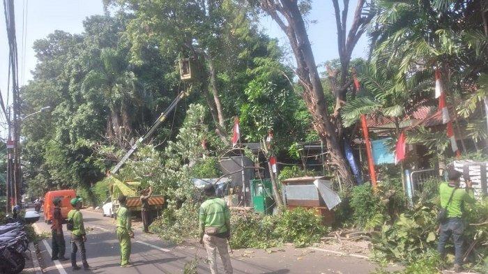 Sebanyak 899 Pohon Rawan Tumbang di Jakarta Utara Dipangkas