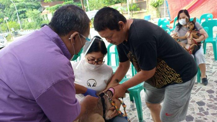 Upaya Mencegah Penyebaran Penyakit Rabies Petugas Suku Dinas KPKP Jaktim Buka Layanan Jemput Bola
