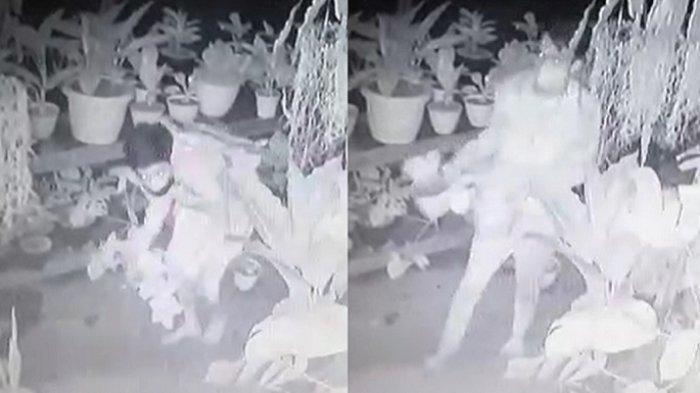 Dua Pelaku Pencurian Tanaman Hias Aglaonema di Bekasi Terekam CCTV, Pemilik Merugi Jutaan Rupiah