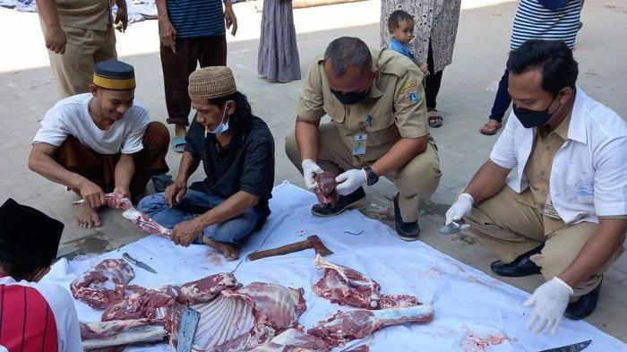 Duh! 21,5 Kg Daging Kurban di Kepulauan Seribu Dimusnahkan karena Mengandung Cacing