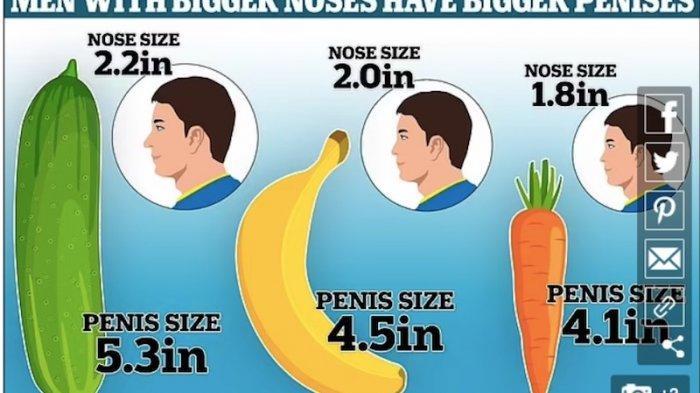 Penelitian Terbaru Semakin Besar Hidung Menunjukan Ukuran Alat Vital Pria Lebih Panjang