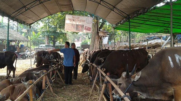 Pedagang Hewan Kurban di Tangsel Laris Manis Jual Sapi dan Kambing di Tengah Pandemi, Begini Kiatnya