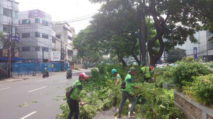 Antisipasi Pohon Tumbang Saat Musim Penghujan, Sudin Kehutanan Jakarta Pusat Toping 9.302 Pohon