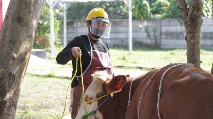 Peringati Hari Raya Idul Adha, Astra Tol Tangerang-Merak Salurkan Satu Ton Daging Kurban