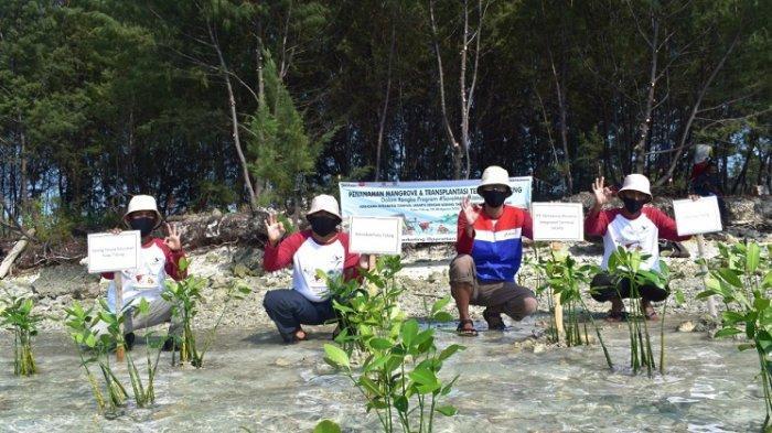 5.000 Bibit Mangrove Ditanam di Pulau Tidung Kecil Kepulauan Seribu