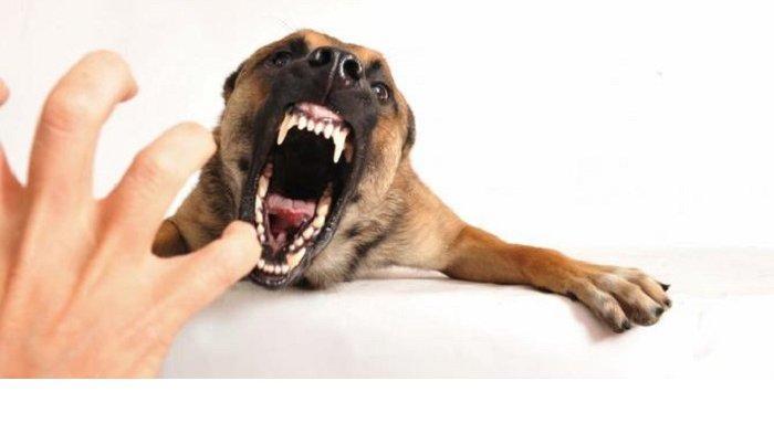 PRT Tewas Digigit Anjing, Begini Pertolongan Pertama Setelah Digigit Anjing