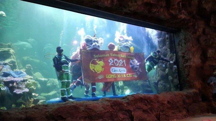 Atraksi Dua Baraongsai di Sea World Ancol Meriahkan Tahun Baru Imlek 2572
