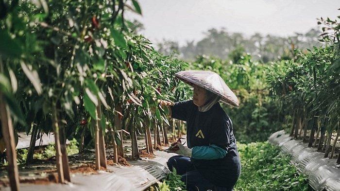 Petani Merasa Rugi Selama Pandemi Covid, Ini Tips dari Crowde untuk Bisa Dapat Cuan Banyak
