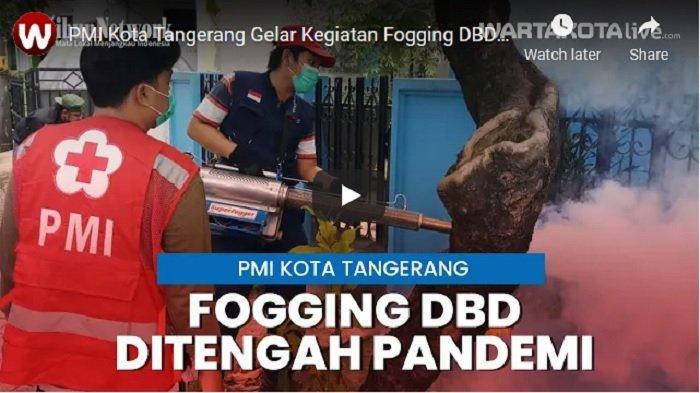 VIDEO PMI Kota Tangerang Gelar Kegiatan Fogging DBD di Tengah Pandemi