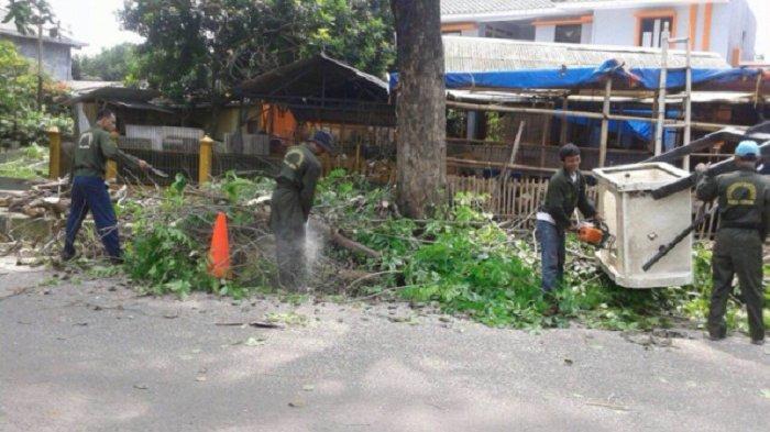 Petugas DLHK Depok Memangkas Sejumlah Pohon Rimbun untuk Mencegah Terjadinya Pohon Tumbang di Depok