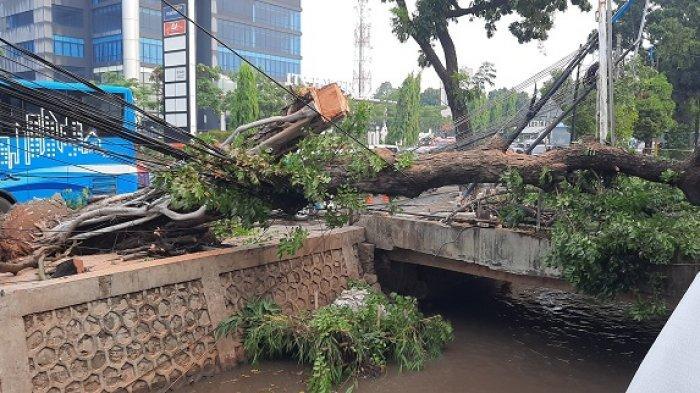 Warga Kalibata Selatan Gempar Saat Mereka Tahu Ada Pohon Besar yang Tumbang Menimpa Tiang Listrik