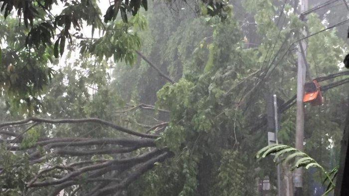 2 Mobil Jenazah Milik Disperkimta Tangsel Ringsek Tertimpa Pohon Tumbang