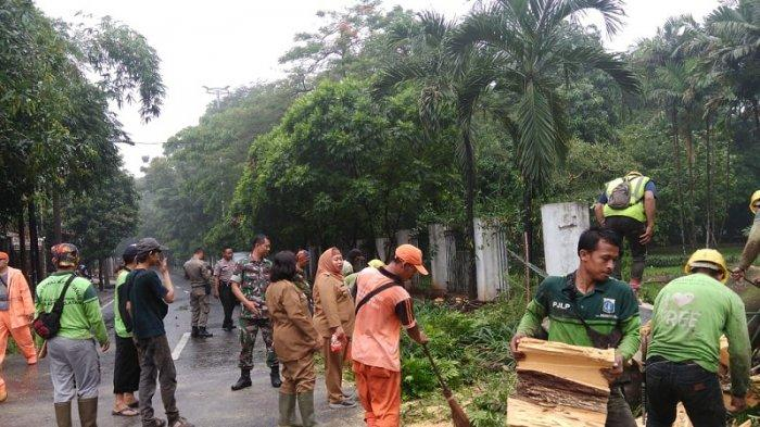 Pemprov DKI Menebang Puluhan Ribu Pohon Kala Musim Hujan Karena Sudah Tua