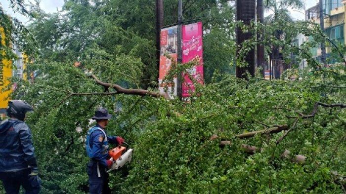 7 Pohon di 6 Titik Wilayah Jakarta Barat Tumbang, Sebagian Besar Karena Diterpa Hujan Angin