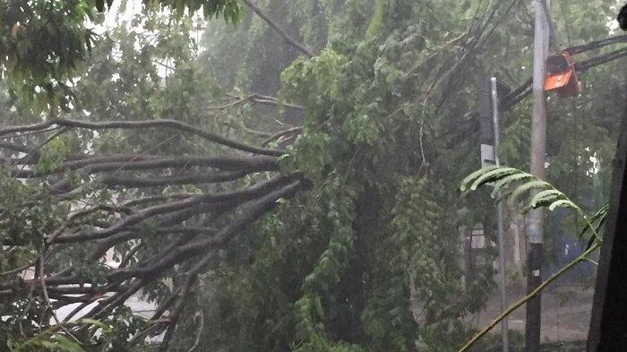 BREAKING NEWS: Hujan Angin di Jakarta Barat, Sejumlah Pohon Bertumbangan