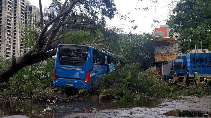 Bus Transjakarta Ringsek Tertimpa Pohon Tumbang di Ancol, Bagaimana Nasib Penumpangnya?