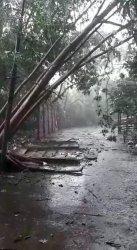 Pohon Tumbang dan Tembok Roboh Saat Hujan Disertai Angin Kencang di Pondok Cabe, Pamulang