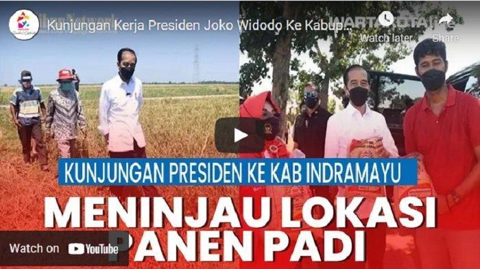 VIDEO Presiden Jokowi Ke Kabupaten Indramayu Tinjau Lokasi Panen Padi, Pastikan Tak Ada Impor Beras