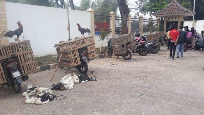 Harga Ayam Naik dari Rp 120.000 per Ekor menjadi Rp 150.000 per Ekor  di RPHU Rorotan