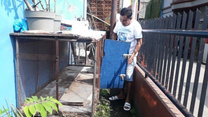 Ular Sanca Sepanjang Delapan Meter Dievakuasi, Pemilik Mengenang Pertama Kali Bertemu Jackie