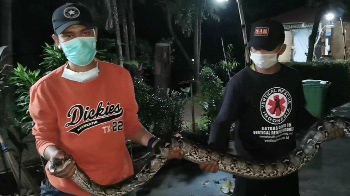 Warga Situ Pamulang Terkejut saat Asyik Nongkrong, Ular Sanca Batik Sepanjang 3 Meter Melintas