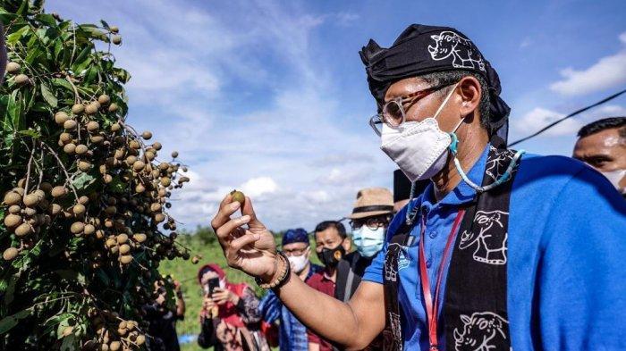 Tinjau Agrowisata dan Eduwisata di Banten, Masyarakat Dinilai Sandi Siap Sambut Era Pariwisata Baru