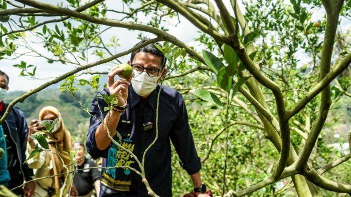 Tidak Pasang Baliho, Peluang Sandiaga Uno Dinilai Makin Kuat Menuju 2024