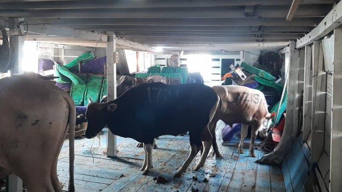 Program Sedekah Karyawan Palyja Salurkan Kurban ke Kampung Nelayan, Jakarta Utara