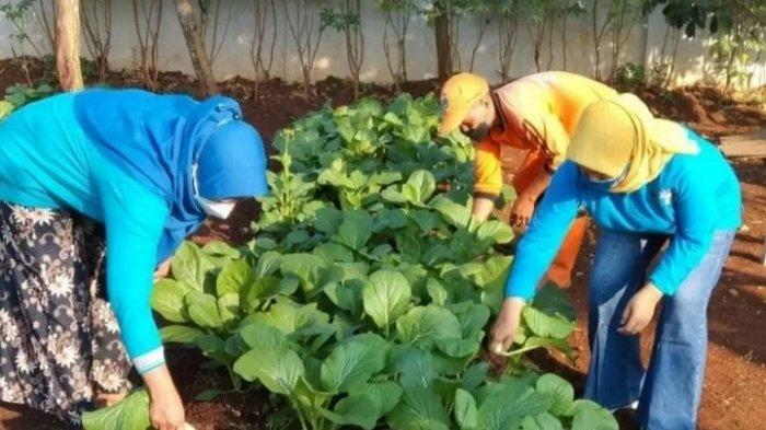 Warganya Isoman Covid-19, PKK Kelurahan Cilangkap Beri Bantuan Sayuran Hasil Pertanian Kota