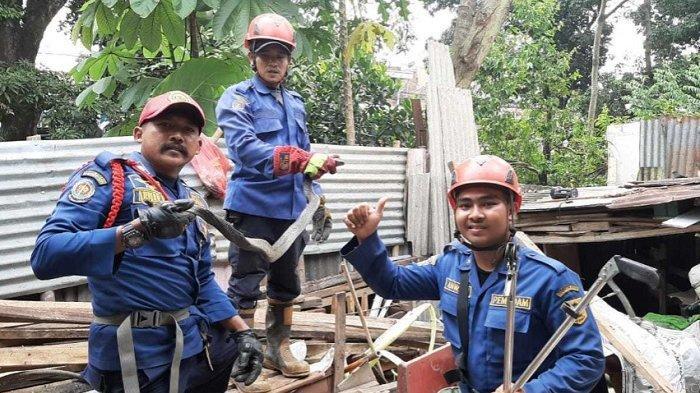 Tiga Pekan, Damkar Kabupaten Bogor Berhasil Amankan 20 Ular Liar yang Masuk Permukiman Warga