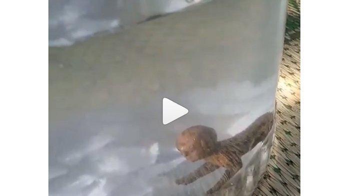 VIDEO Sosok Diduga Tuyul Tertangkap Warga Jadi Viral di Medsos, Langsung Dimasukkan ke Toples Kaca
