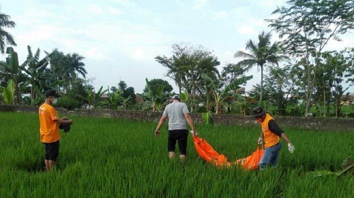 Alami Pikun, Seorang Kakek Ditemukan Tak Bernyawa Tergeletak di Pinggir Sawah Warga di Ciampea Bogor
