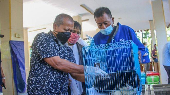 Gelar Layanan Sterilisasi Kucing Peliharaan, Sudin KPKP Jakarta Utara Sebut Warga Daftar Online