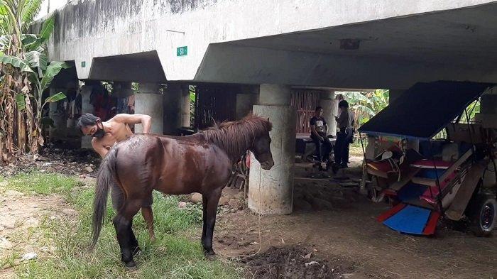 VIDEO: Pendapatan Kusir Delman Kolong Tol Priok Terjun Drastis karena Corona