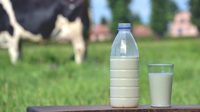 Protein Hewani dari Susu Lebih Mudah Diserap Tubuh Anak untuk Tumbuh Kembang