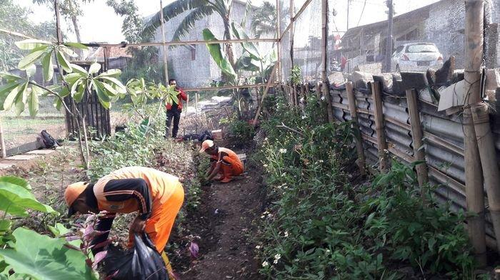 Petugas PPSU Kelurahan Cipinang Melayu Minta Dibekali Ilmu Pengembangbiakan Kupu-kupu