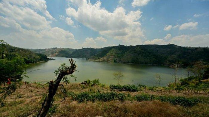 Hijaukan Waduk Logung dan Desa Kandang Mas, Bakti Lingkungan Djarum Foundation Tanam 310 Bibit Pohon