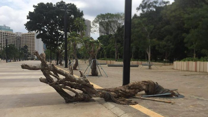 Tak Hanya Rusak Tanaman Hias, Suporter Juga Robohkan Pohon Saat Final Piala Presiden