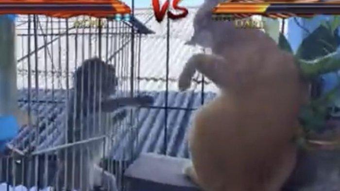 Youtuber Rian Mardiansyah Dalam Masalah Besar, Ia Bakal Dipolisikan terkait Dugaan Menyiksa Monyet