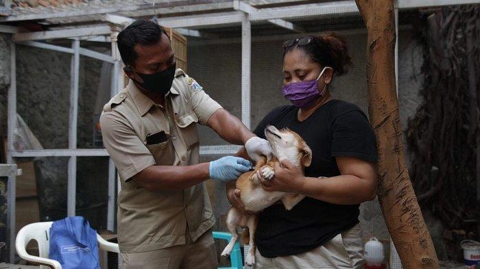 Puluhan Hewan Peliharaan di Tiga RW Kelurahan Penjaringan Divaksin Rabies