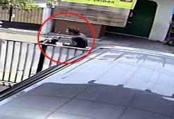 Terekam CCTV, Ini Wajah Pelaku Peneror Cairan Kimia di Jakarta Barat