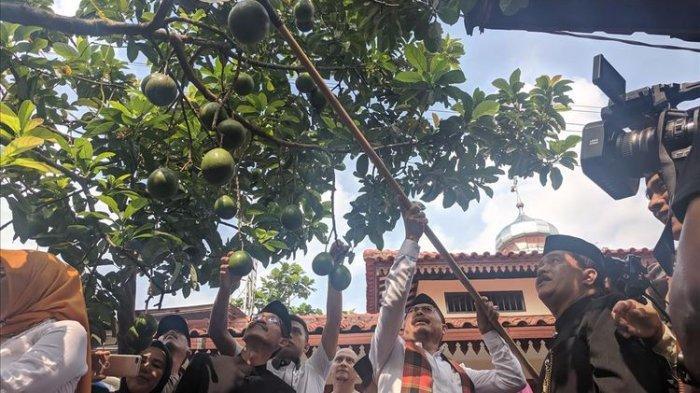 VIDEO: Aksi Wali Kota Jakarta Selatan Marullah Ngangget Alpukat di Cipedak Jagakarsa