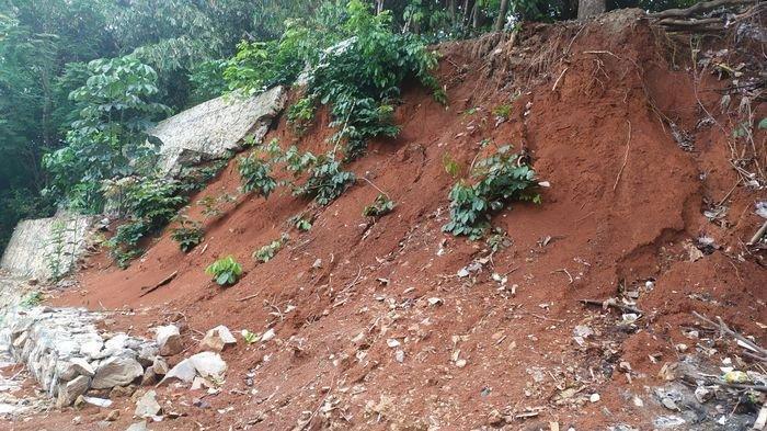 Perbaikan Turap Makam Asal-asalan, Warga Gelisah Khawatir Pohon Karet Bisa Roboh Timpa Rumahnya