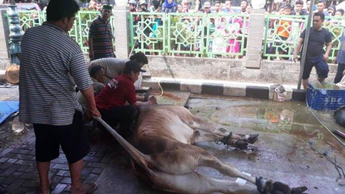 Warga Bekasi Padati Masjid Agung Al Barkah Saksikan Pemotongan Hewan Kurban