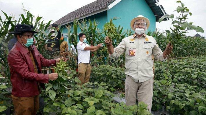 Pemprov Banten Dorong Peningkatan Produksi Kacang Kedelai untuk Menjaga Stabilitas Harga