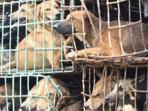 20150930pemilik-lapo-tidak-tahu-kesehatan-daging-anjing-yang-dijual_20150930_154954.jpg